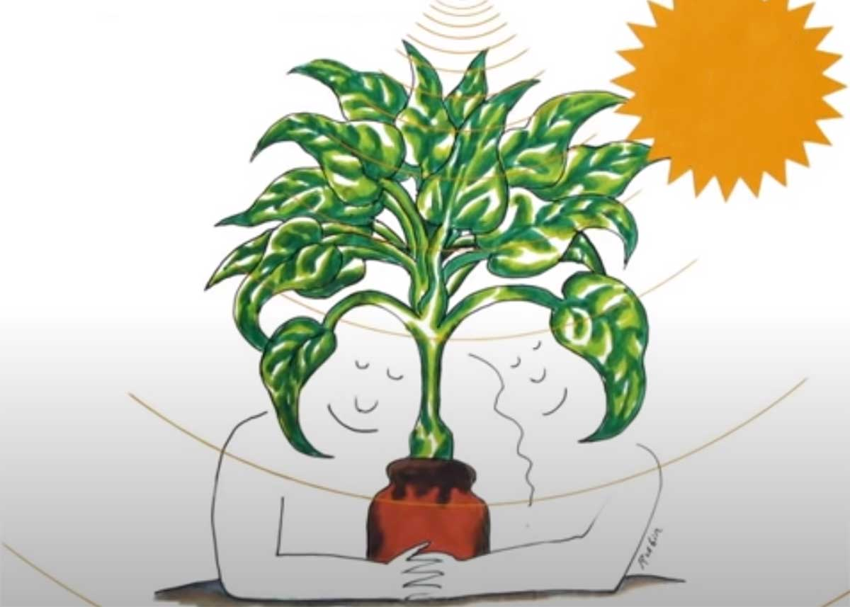 Plantasia is music for plants